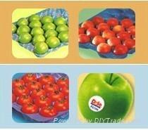 Vacuum Formed Blister Packaging Fresh Tomato Tray Liner