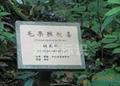 植物園花草解說牌 4