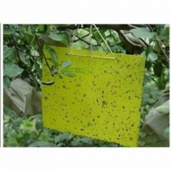 Thrips Whitefly Glue Paper Stick Insect
