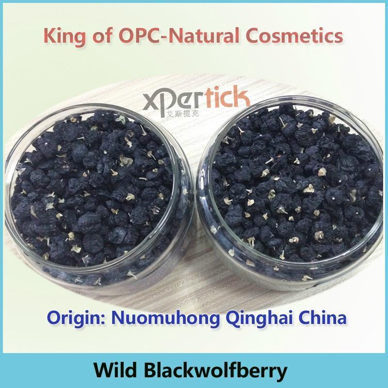 Tibetan Wild Black Goji Wolfberry—Qinghai Origin 1