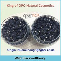 Tibetan Wild Black Goji Wolfberry—Qinghai Origin