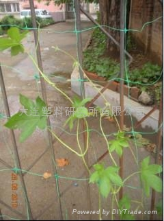 Plastic bi-oriented streched net production line 2