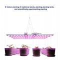 园艺水培商业垂直农场LED植物生长灯 5