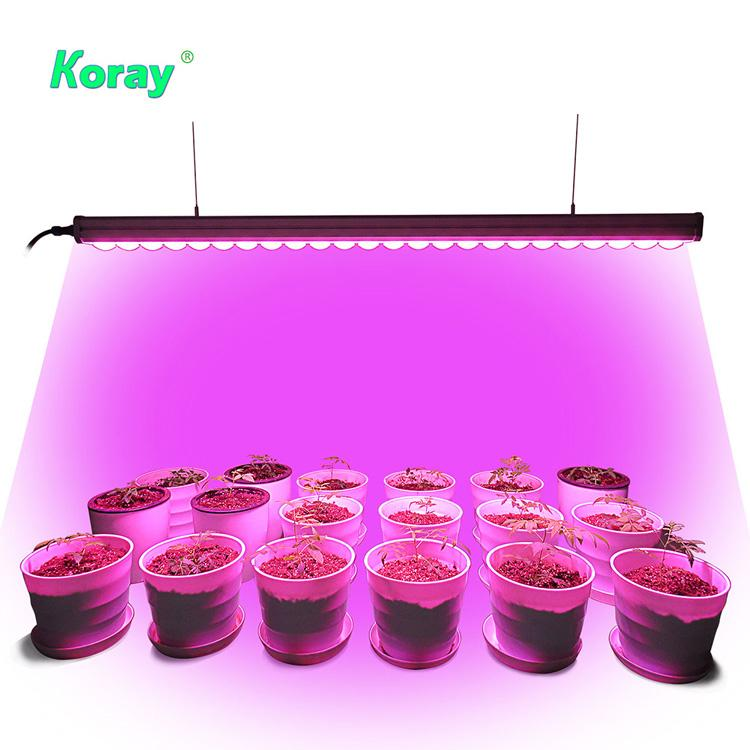 高功率垂直農業植物燈立體種植燈高間距層架結構植物工廠植物燈 3