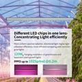 高功率垂直农业植物灯立体种植灯高间距层架结构植物工厂植物灯 7