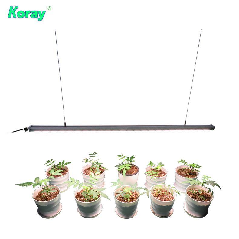 四通道四种不同的光谱单独控制调光植物灯实验种植育苗植物工厂 4