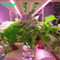Waterproof commercial hydroponic led grow light tube bar full spectrum grow lamp 6