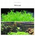 Aquarium plant growth lights fish tank lamp ultra-high system light effect 13