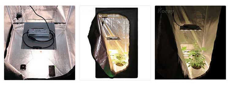 藥用植物燈地下室植物帳篷醫用植物 9