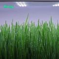 經濟型育苗專用光譜防水植物燈模組層架垂直農業燈 6