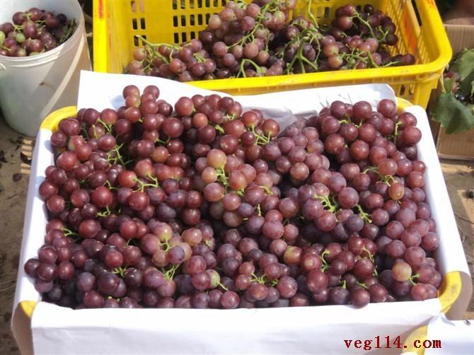 陕西高原红提葡萄 2