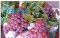 陕西高原红提葡萄 3