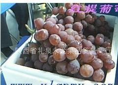 陕西高原红提葡萄 4
