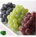 Fresh Grape Red and Green Grapes