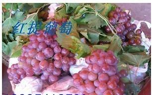 陝西高原青提葡萄 3