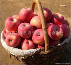 Fuxi apple(fuji apple)