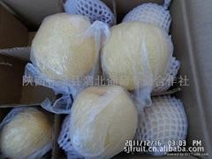 陕西礼泉砀山酥梨酥梨