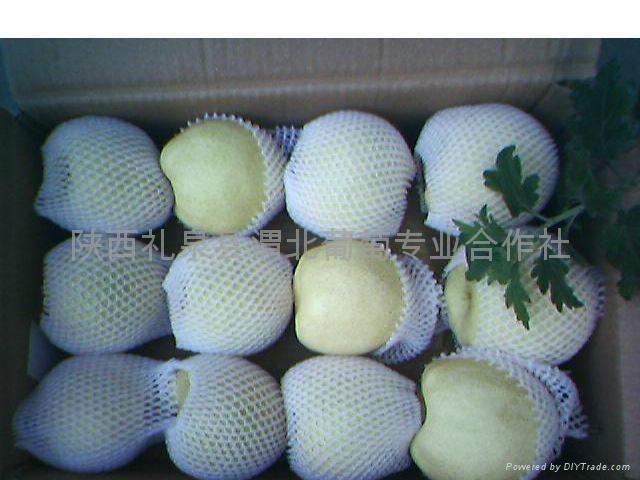Ya Pear, Su Pear, Golden Pear 5