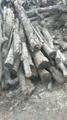 烧木炭专用苹果树身,苹果树木头,果木出售 1