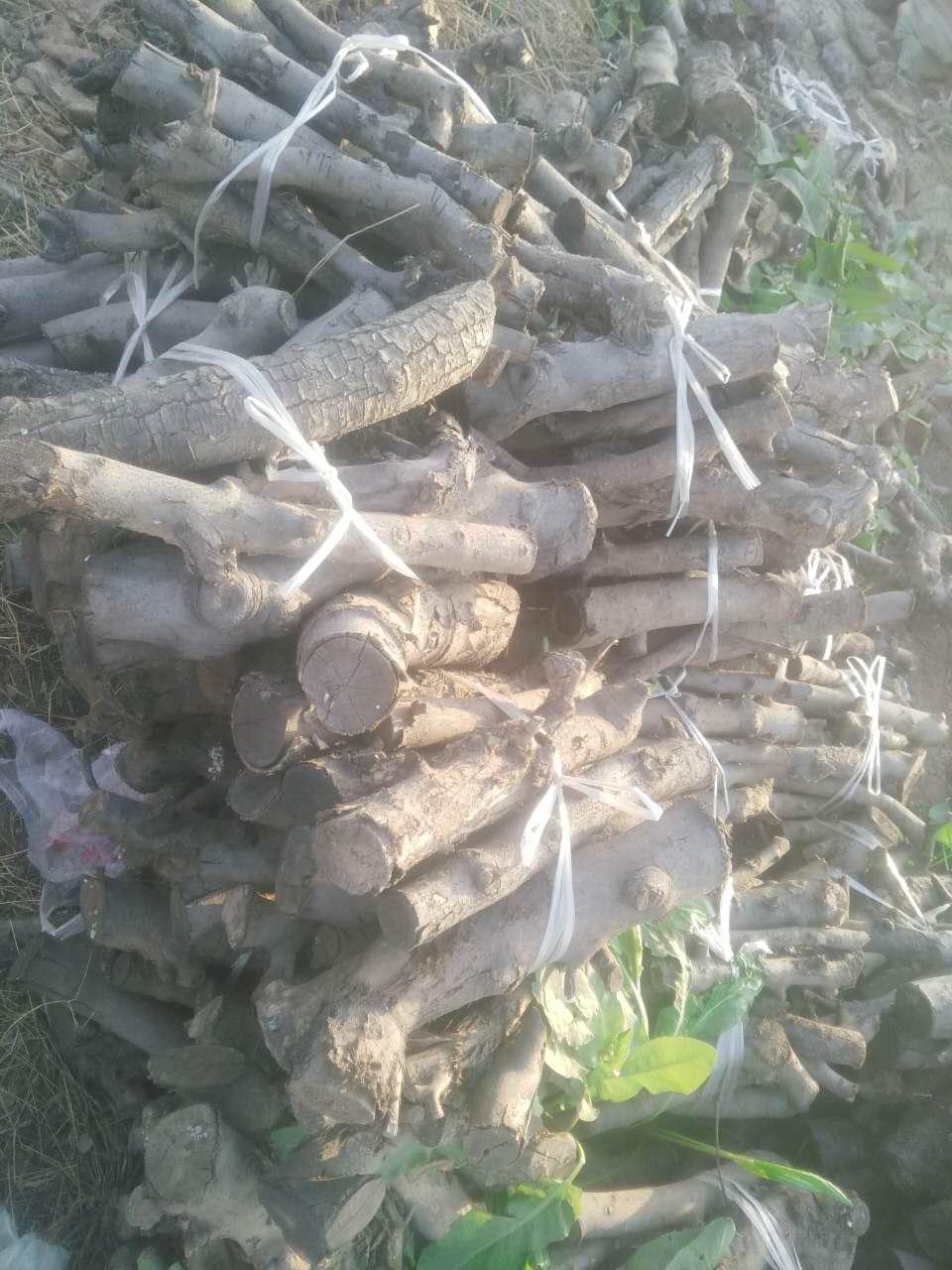 烧木炭专用苹果树身,苹果树木头,果木出售 3