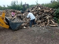 果木锯末,杨木木片,烧锅炉用木片供应中 2