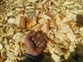 果木锯末,杨木木片,烧锅炉用木片供应中 3