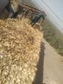 果木锯末,杨木木片,烧锅炉用木片供应中 4