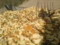 果木锯末,杨木木片,烧锅炉用木片供应中 5