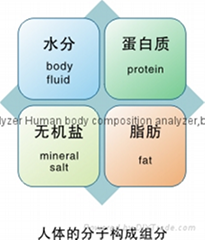 bodecoder human body composition beauty machine slimming machine app scale