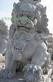 曲阳石雕大理石狮子  3