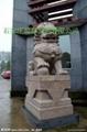 曲阳雕刻门口大理石狮子