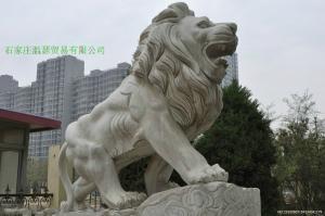 曲阳雕刻门口大理石狮子 2