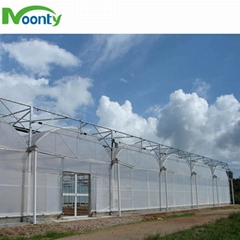 Multi span greenhouse for farm