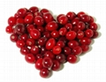 Cranberry P.E