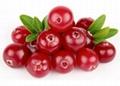 Cranberry P.E 3