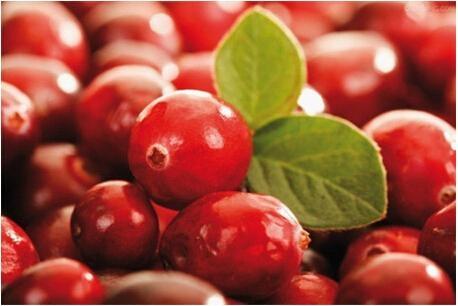 Cranberry P.E 4