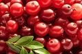 Cranberry P.E 5