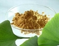 Ginkgo Biloba Extract 3