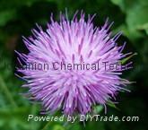 Silymarin  milk thistle extract silybum marianum extract