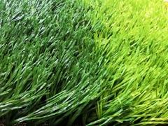 Soccer Field Grass 50mm