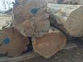 黃柏原木精板