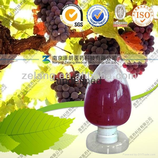 Natural 95% OPC Grape Seed Extract 1
