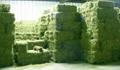 Quality Alfalfa Hay,Timothy Hay and