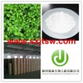 Stevia extract stevioside powder