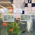 多种语言电子价签电子货架标签433mhz价签