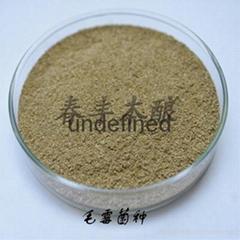 毛霉菌长毛短毛腐乳制作臭豆腐菌种