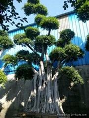 2015年福建漳州造型小葉榕樁頭價格(嫁接榕樹樁頭)