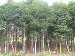 各种规格沉香木