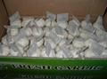 china garlic 2