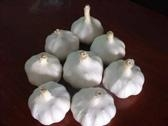 fresh china garlic from chinese garlic factory 1